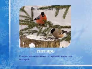 клёст Крупнее снегиря с узкими крыльями, раздвоенным хвостом. Самцы имеют кра