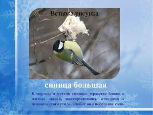. щегол Зимние перекочёвки щеглов зависят от урожая кормовых семян и от снег