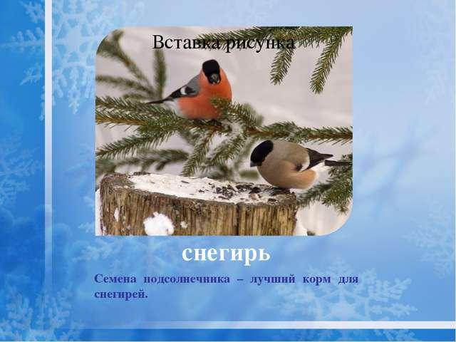 клёст Крупнее снегиря с узкими крыльями, раздвоенным хвостом. Самцы имеют кра...