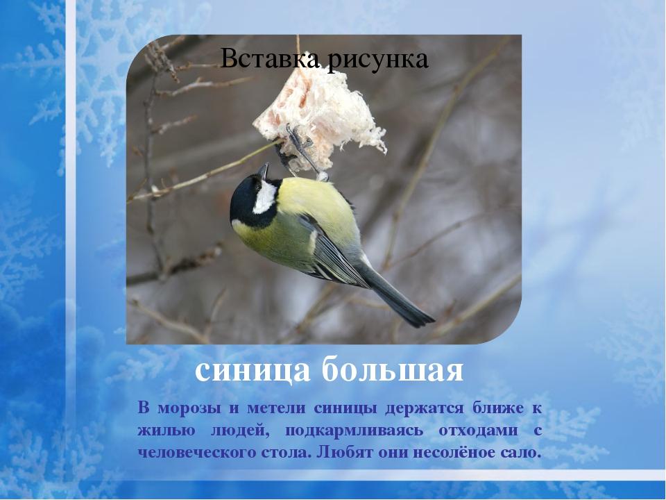 . щегол Зимние перекочёвки щеглов зависят от урожая кормовых семян и от снег...