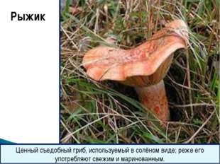 Рыжик Ценный съедобный гриб, используемый в солёном виде; реже его употребля