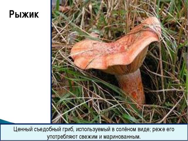 Рыжик Ценный съедобный гриб, используемый в солёном виде; реже его употребля...