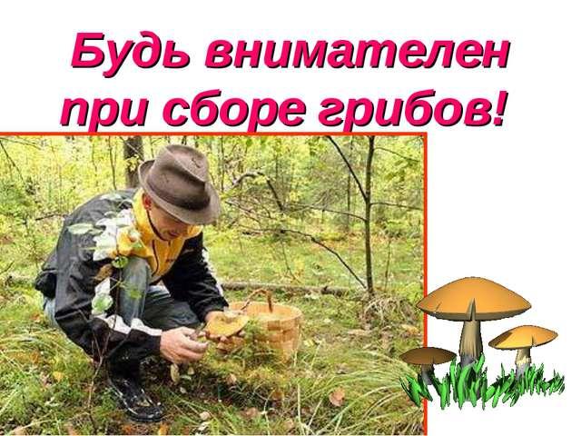 Будь внимателен при сборе грибов!