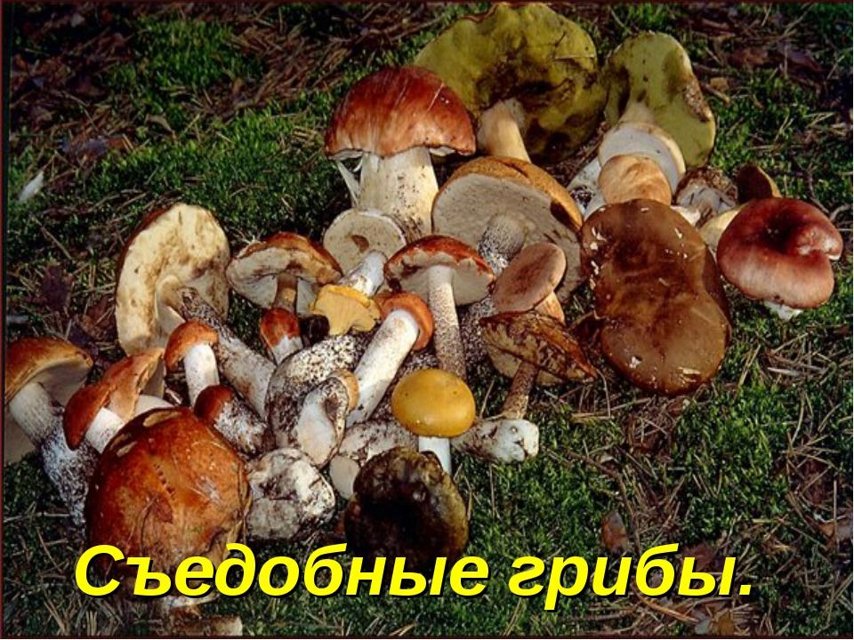 Съедобные грибы.
