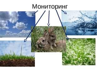 Мониторинг К примеру, мониторинг по отношению к животному миру – это отслежи