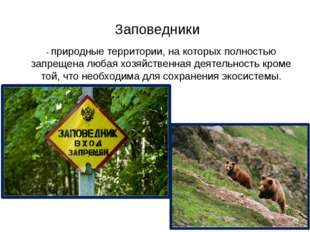 Заповедники - природные территории, на которых полностью запрещена любая хозя