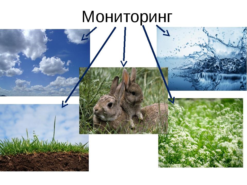 Мониторинг К примеру, мониторинг по отношению к животному миру – это отслежи...