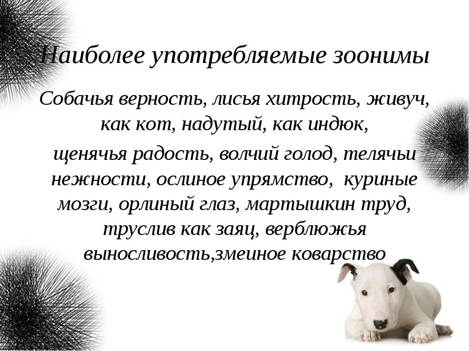 Наиболее употребляемые зоонимы Собачья верность, лисья хитрость, живуч, как к...