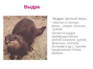 Выдра- крупный зверь. Обитает в лесных реках, озерах, богатых рыбой. Питаетс
