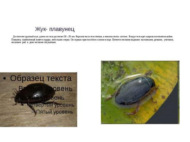 Жук- плавунец Достаточно крупный жук: длина его тела достигает 30 – 35 мм. В...