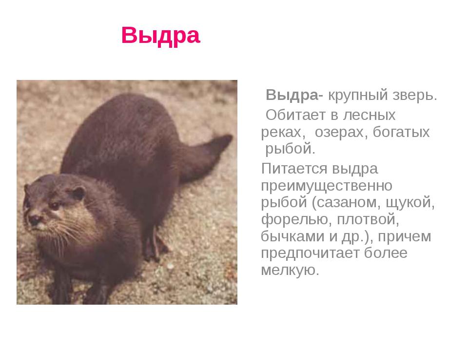 Выдра- крупный зверь. Обитает в лесных реках, озерах, богатых рыбой. Питаетс...