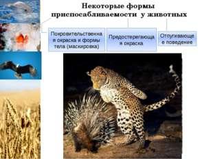 Некоторые формы приспосабливаемости у животных Покровительственная окраска и