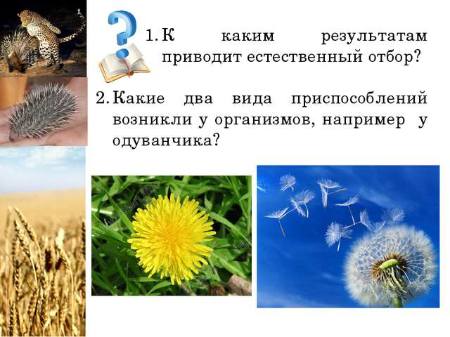 К каким результатам приводит естественный отбор? Какие два вида приспособлени...