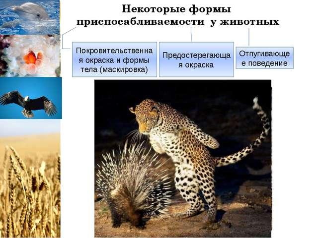 Некоторые формы приспосабливаемости у животных Покровительственная окраска и...
