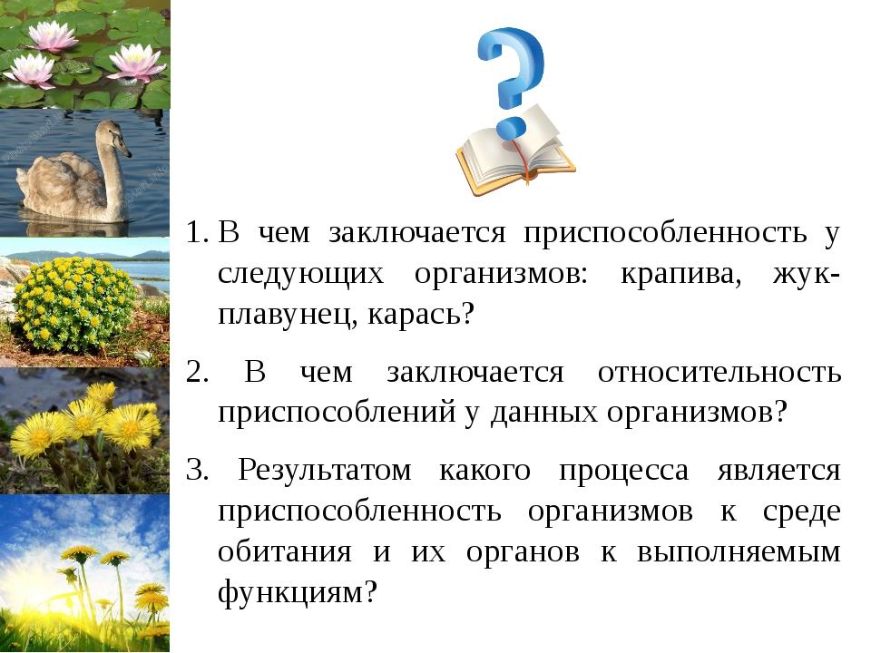 В чем заключается приспособленность у следующих организмов: крапива, жук-плав...