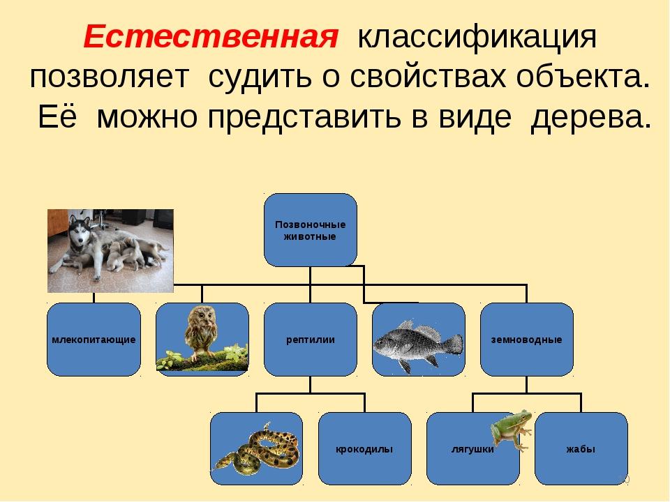 * Естественная классификация позволяет судить о свойствах объекта. Её можно п...