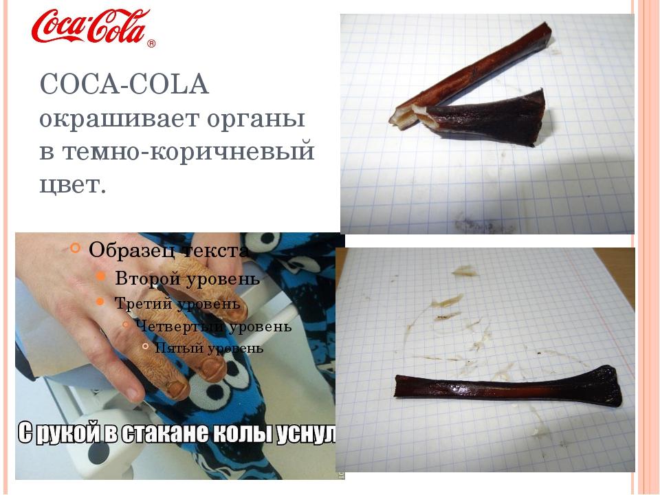 COCA-COLA окрашивает органы в темно-коричневый цвет.