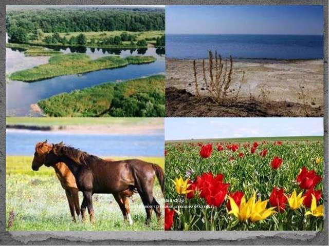 ЛАНДШАФТЫ Государственного природного заповедника «Ростовский»