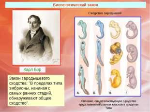 """Биогенетический закон Карл Бэр Закон зародышевого сходства: """"В пределах типа"""