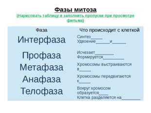 Фазы митоза (Нарисовать таблицу и заполнить пропуски при просмотре фильма) Фа