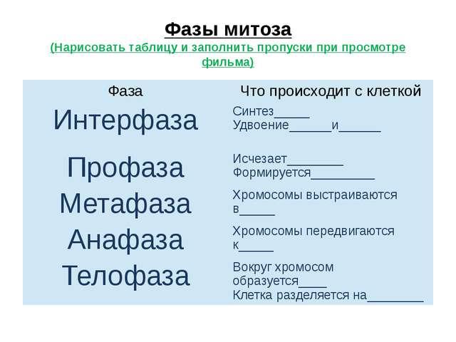 Фазы митоза (Нарисовать таблицу и заполнить пропуски при просмотре фильма) Фа...
