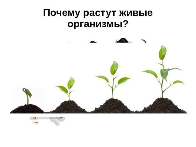Почему растут живые организмы?