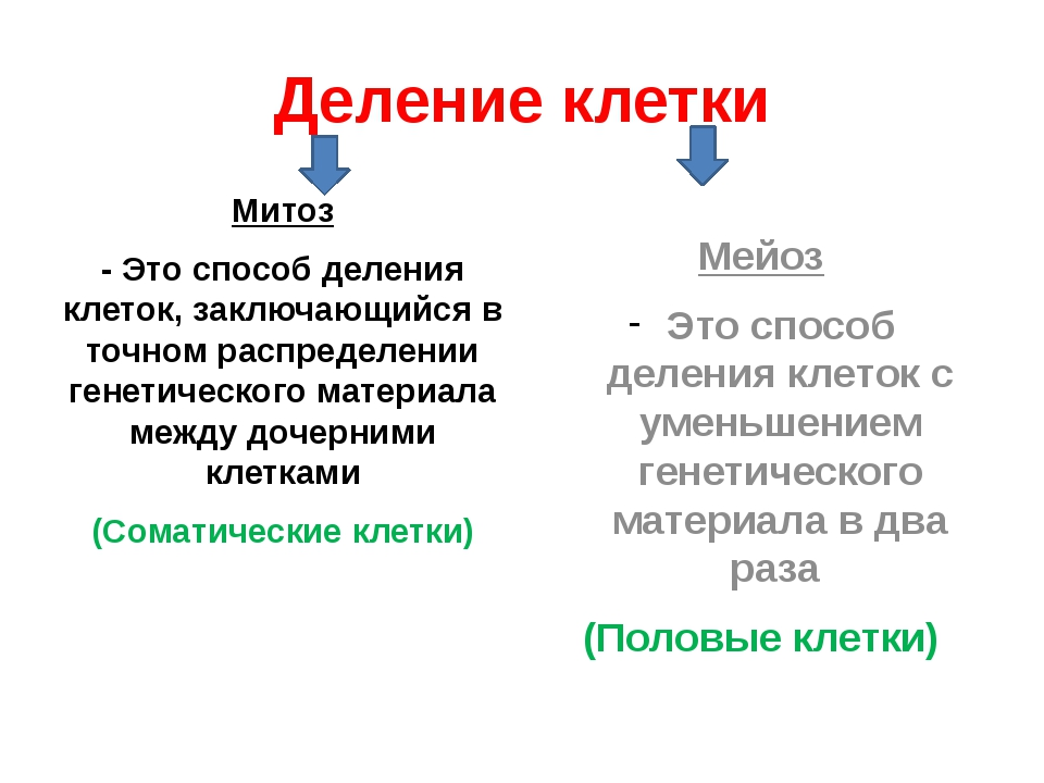 Деление клетки Митоз - Это способ деления клеток, заключающийся в точном расп...
