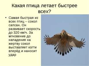 Какая птица летает быстрее всех? Самая быстрая из всех птиц – сокол сапсан. О