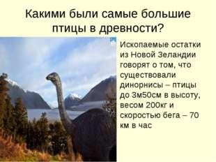 Какими были самые большие птицы в древности? Ископаемые остатки из Новой Зела