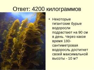 Ответ: 4200 килограммов Некоторые гигантские бурые водоросли подрастают на 90