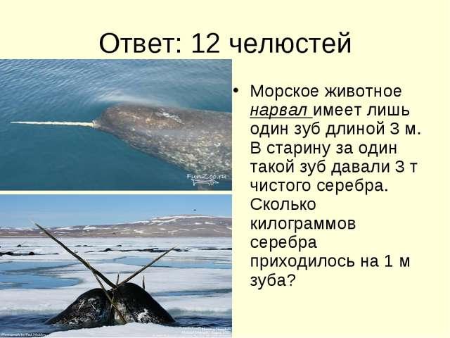 Ответ: 12 челюстей Морское животное нарвал имеет лишь один зуб длиной 3 м. В...