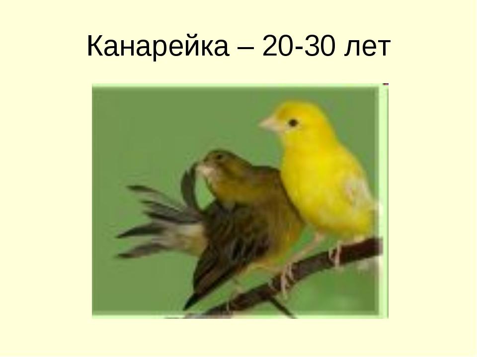 Канарейка – 20-30 лет