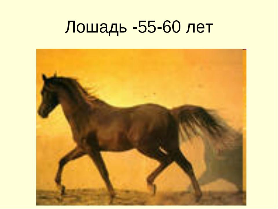 Лошадь -55-60 лет