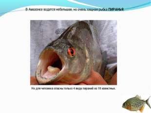 В Амазонке водится небольшая, но очень хищная рыбка ПИРАНЬЯ. Но для человека
