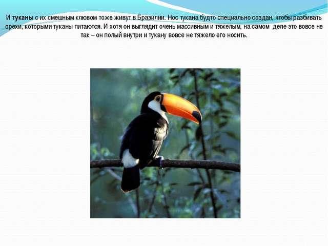 И туканы с их смешным клювом тоже живут в Бразилии. Нос тукана будто специаль...