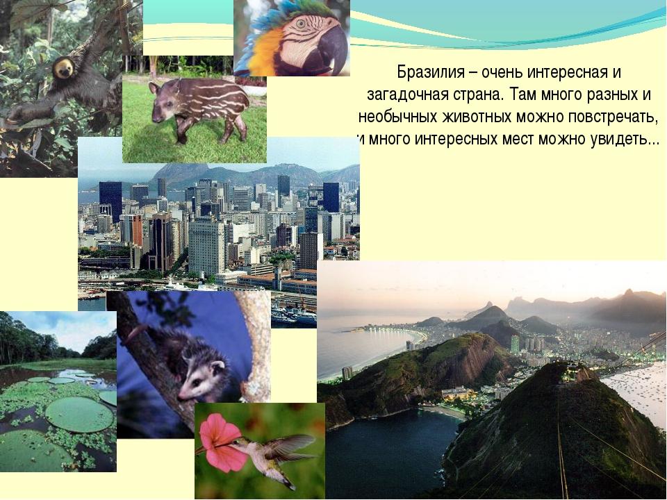 Бразилия – очень интересная и загадочная страна. Там много разных и необычных...