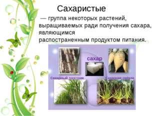 Саxаристые — группа некоторых растений, выращиваемыx ради получения саxара,