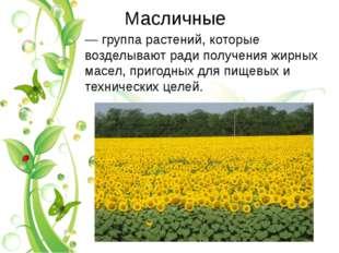 Масличные — группа растений, которые возделывают ради получения жирных масел,