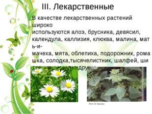 III. Лекарственные В качестве лекарственных растений широко используютсяалоэ