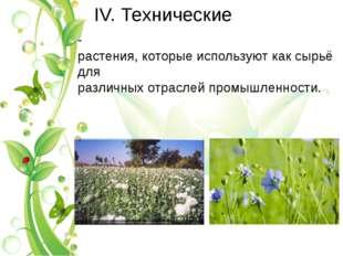 IV. Теxнические -растения,которыеиспользуюткаксырьёдля различныхотрасле