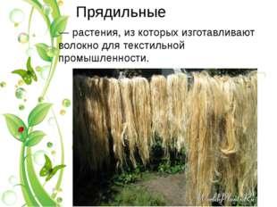 Прядильные — растения, из которых изготавливают волокно для текстильной промы