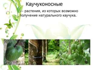 Каучуконосные — растения, из которых возможно получениенатурального каучука.