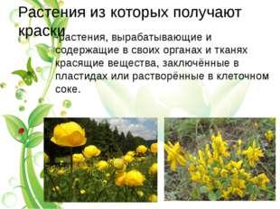 Растения из которых получают краски -растения, вырабатывающие и содержащие в