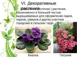 VI. Декоративные растения — (комнатные растения ) растения, обыкновенно и бол