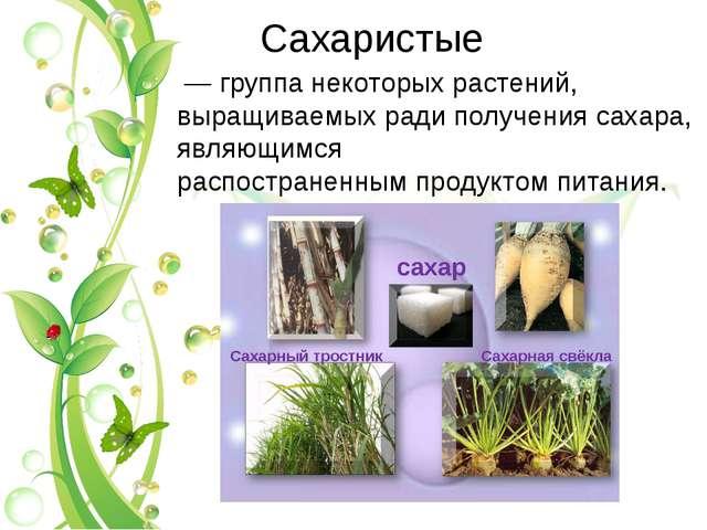 Саxаристые — группа некоторых растений, выращиваемыx ради получения саxара,...