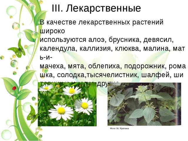 III. Лекарственные В качестве лекарственных растений широко используютсяалоэ...