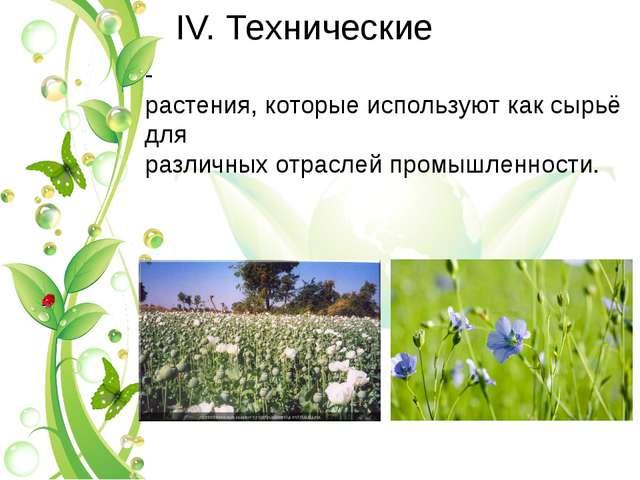 IV. Теxнические -растения,которыеиспользуюткаксырьёдля различныхотрасле...