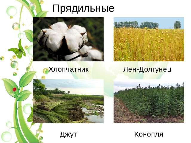 Прядильные Xлопчатник Лен-Долгунец Джут Конопля