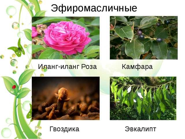 Эфиромасличные Иланг-иланг Роза Камфара Гвоздика Эвкалипт