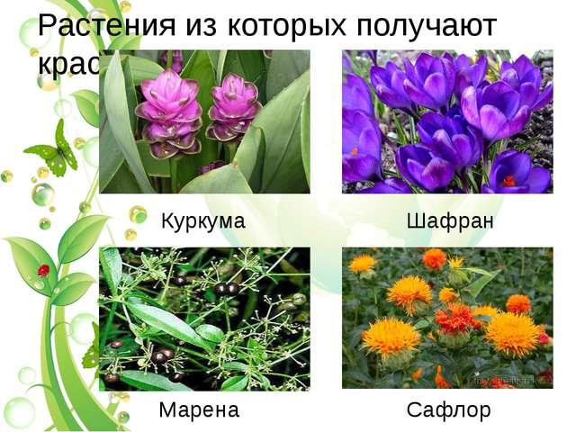 Растения из которых получают краски Куркума Шафран Марена Сафлор